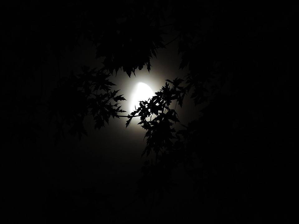 moonlight-through-trees