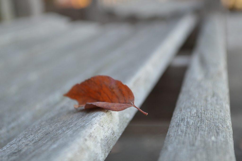 leaf-1100149_1920